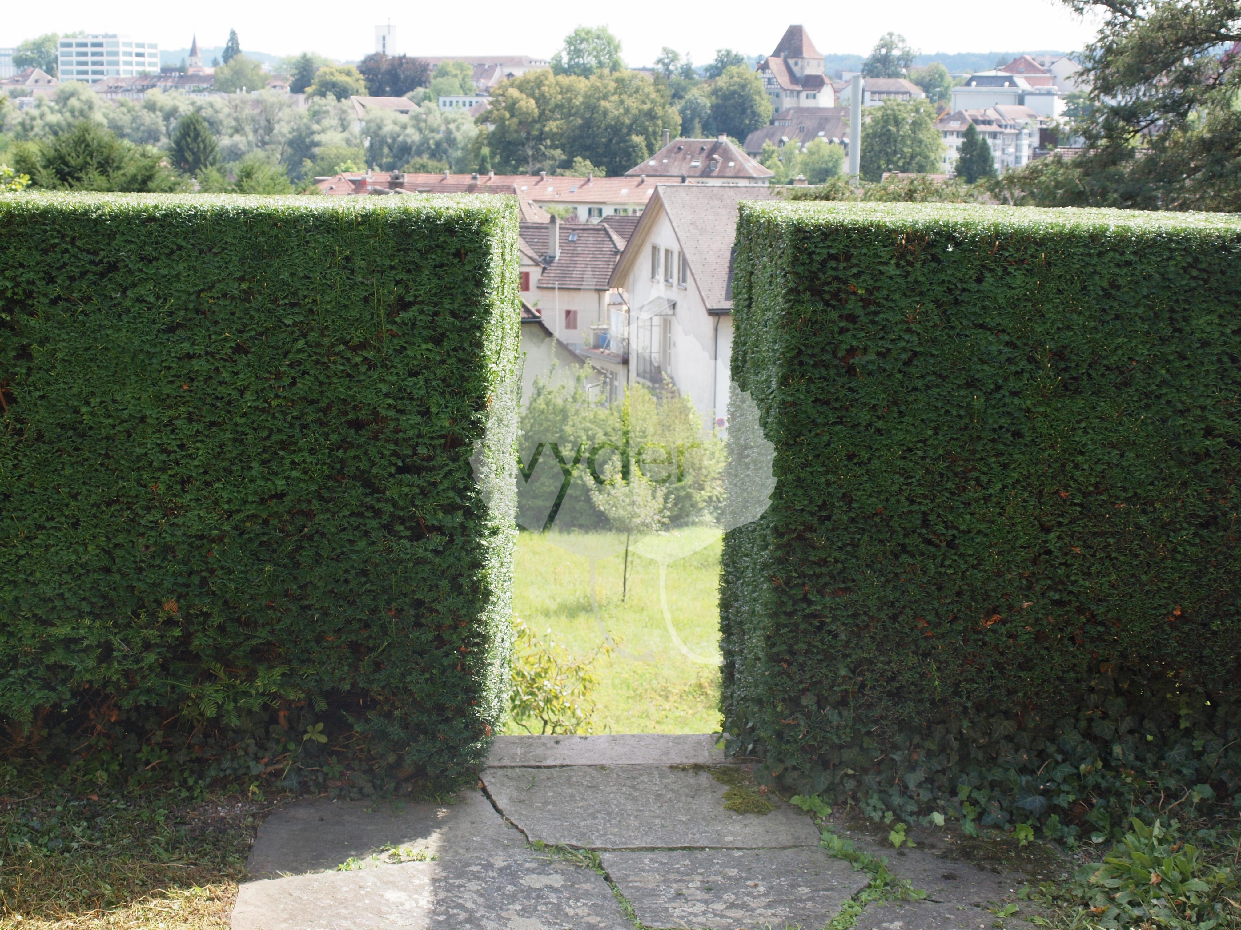 Wände und Sichtschutz Wyder Gartenbau
