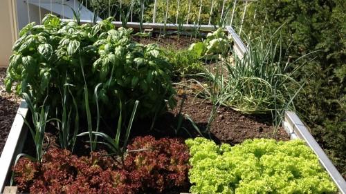 Thema des Monats Januar: Der Nutzgarten
