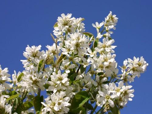 Pflanze des Monats März