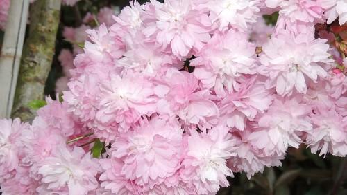 Pflanze des Monats April