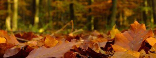 Herbstlaub: Kompostieren oder Unterschlupf für Tiere