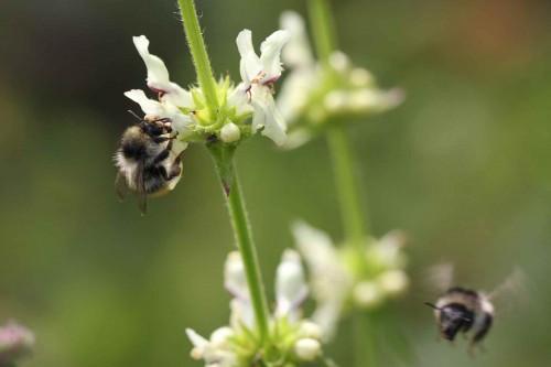 Thema des Monats Mai: Wildbienen